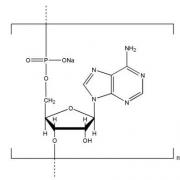 Structure-of-Polyadenosinic-acid-sodium-salt-CAS-NNA-0009