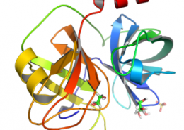 Structure of Recombinant Lysyl Endonuclease EC 3.4.21.50 CAS UENA-0189