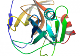 Structure of Recombinant V8 protease EC 3.4.21.19 CAS 66676-43-5