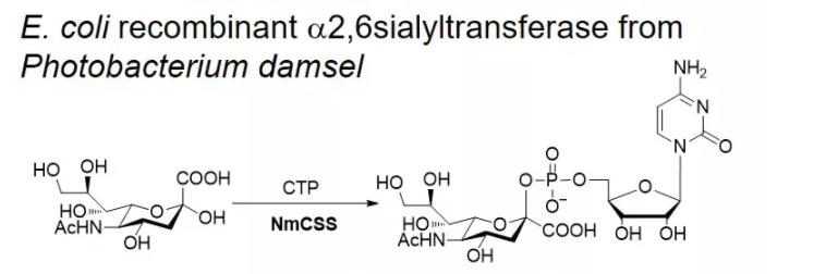 CMP-sialic acid synthase; NmCSS CAS 9067-82-7 EC# 2.7.7.43