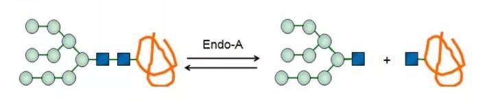Endo-beta-N-acetylglucosaminidase A; Endo-A CAS 37278-88-9 EC 3.2.1.96