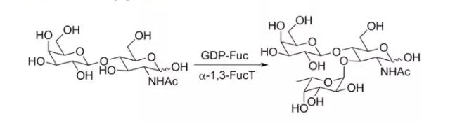 alpha1, 3-fucosyltransferase; alpha1, 3FucT CAS 37277-69-3 EC# 2.4.1.65