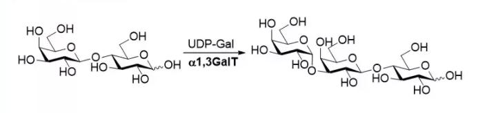 alpha1, 3-galactosyltransferase; alpha1, 3GalT CAS 62213-42-7 EC 2.4.1.87