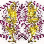 Structure of Pyrophosphatase Inorganic CAS 9024-82-2